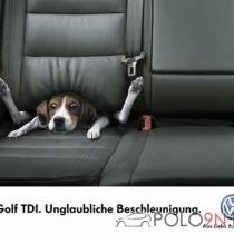 Mitglieder-Profil von Bjoern(#5688) - Bjoern präsentiert auf der Community polo9N.info seinen VW Polo