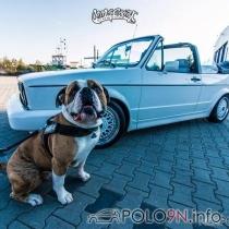 Mitglieder-Profil von U131(#35372) - U131 präsentiert auf der Community polo9N.info seinen VW Polo