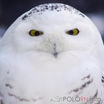 Mitglieder-Profil von Waldgnome(#25228) aus Sachsen - Waldgnome präsentiert auf der Community polo9N.info seinen VW Polo
