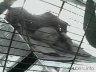 Rattis von px